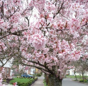 pink_tree_3_fw
